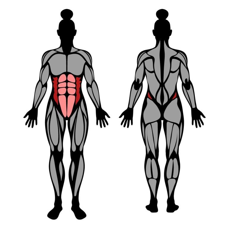 Muskler som tränas av sidoplanka