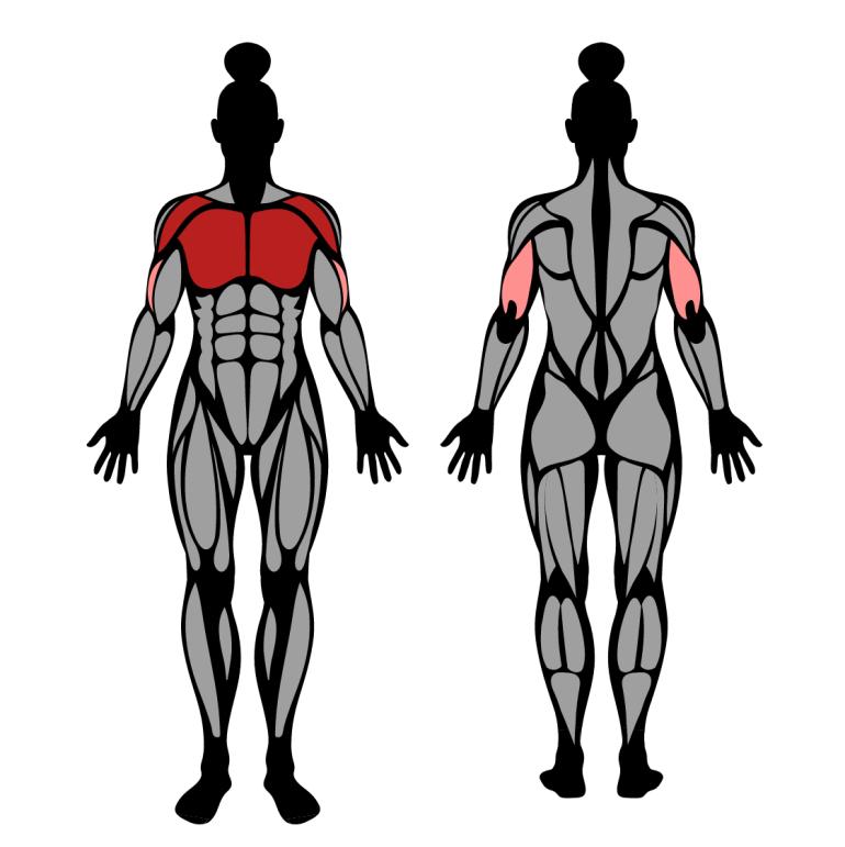 Muskler som tränas av uppåtlutande bänkpress