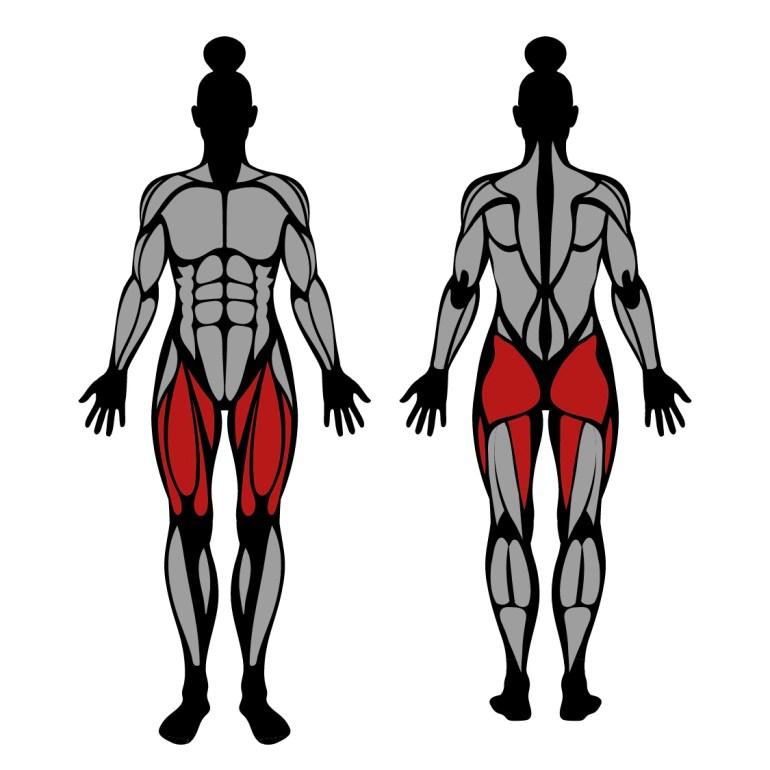 Muskler som tränas av utfall med kroppsvikt