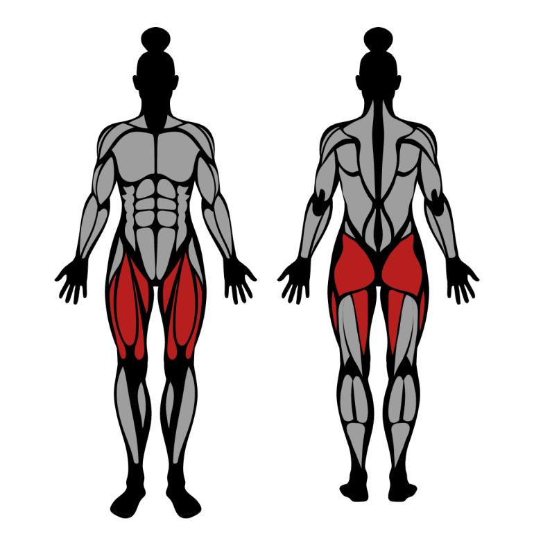 Muskler som tränas vid utfall med skivstång