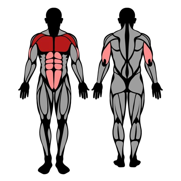 Muskler som tränas av uppåtlutande knästående armhävningar
