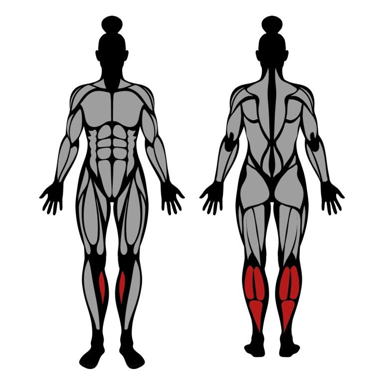 Muskler som tränas vid excentriska tåhävningar