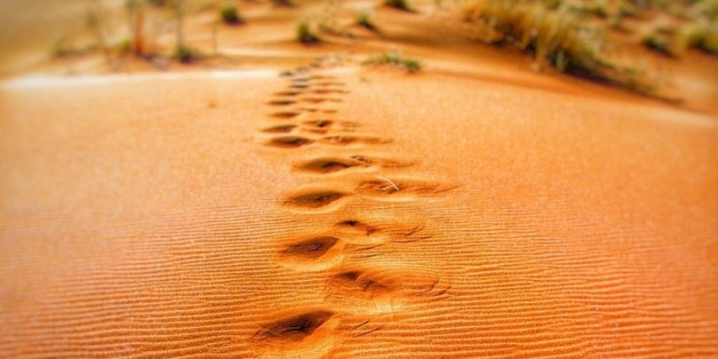 Pegadas na areia, demonstrando que é necessário acompanhar as pegadas financeiras para enriquecer.