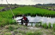 Dugaan Pengelapan dan Penyelewengan Pupuk Bersubsidi di Kabupaten Pelalawan