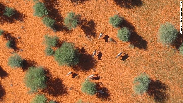 micro-mappers-wildlife-namibia-story-top