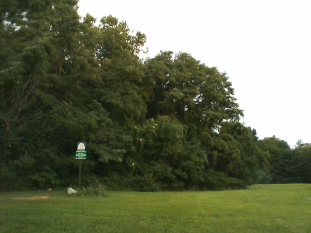 LG B470, Trees