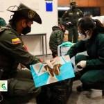 Incautadas más de 560 especies silvestres que eran movilizadas en la modalidad de encomienda en Bogotá
