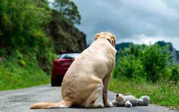 Importantes acciones judiciales contra el maltrato animal en 6 departamentos
