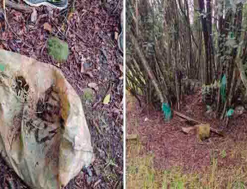 En Suba encuentran cadáveres de animales, estos estarían siendo utilizados para actos satánicos