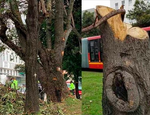 """""""Estamos indignados por tala de árboles en nuestra localidad"""" habitantes de Suba"""