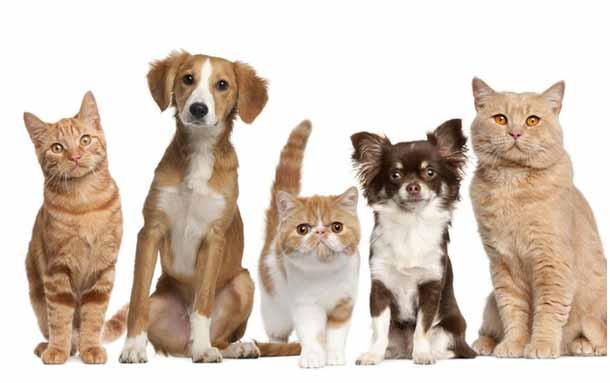 Abren nuevos cupos para esterilización de mascotas en el mes de julio