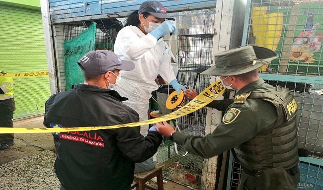 Fiscalía imputa a comerciante que habría exhibido y puesto a la venta animales en pésimas condiciones de bienestar