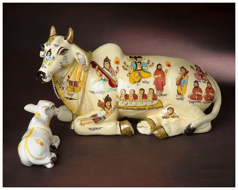 RELAXING KAMDHENU COW