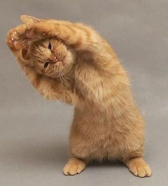 https://i1.wp.com/www.sublimesc.com/wp-content/uploads/2013/10/l-Kitty-yoga...-STRREEETTTCCCHHH.jpg