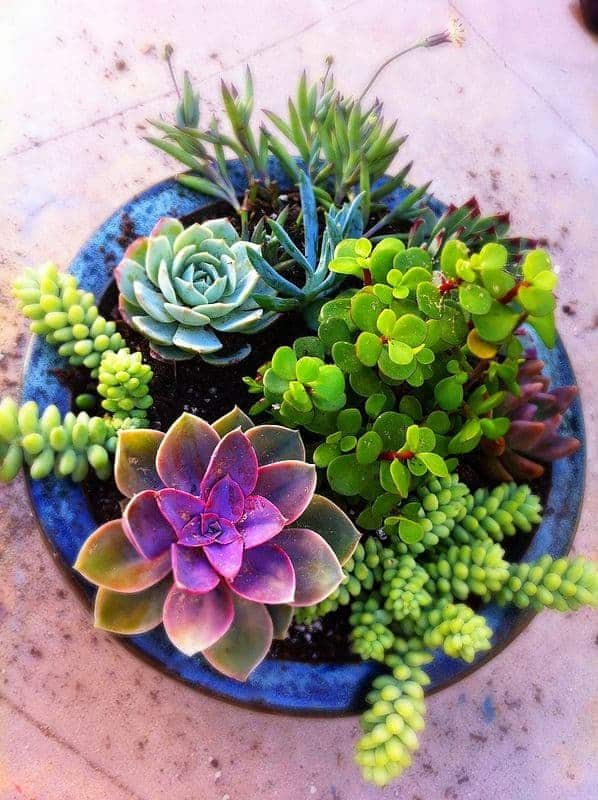 Welcome to Sublime Succulents!