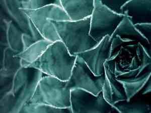 Subllime Succulents
