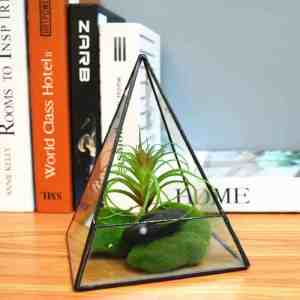 glass terrarium pyramid