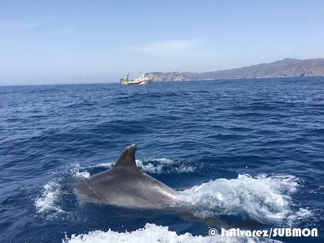 Dofins de Tramuntana-estudio de la población de delfin mular en el Cabo de Creus en colaboración con el sector pesquero