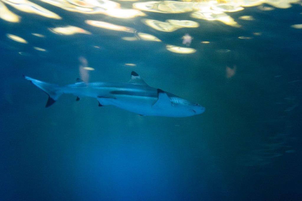 flotabilidad tiburones