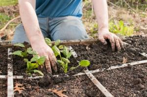 Substance_gardening_shrst__275609996_1200