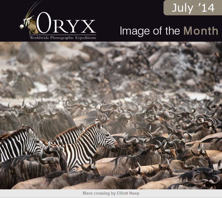 ORYX - WPE July Image of the Month
