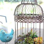 Decorate with Succulents in Birdcage