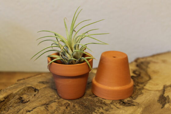 mini terracotta with airplant