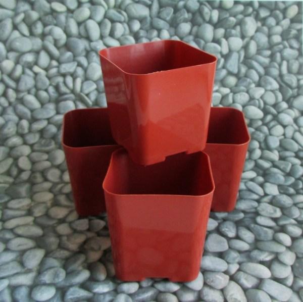 """2"""" plastic pots"""