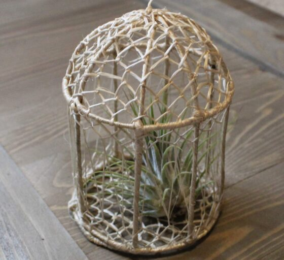 birdcage with airplant inside