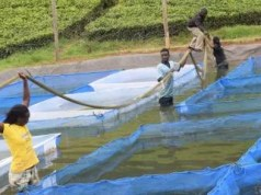 Aquaculture and Water Resources Management