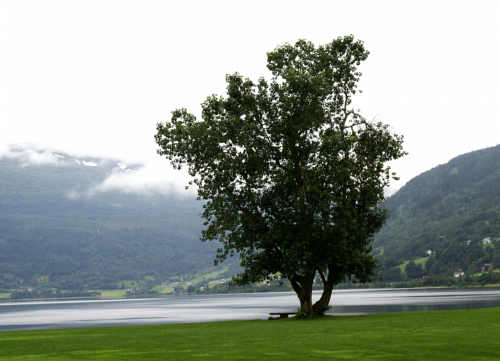 Quiet Place Meditation
