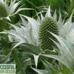 Plant Picking Tools – 3 great ways to help you choose the right plants for your garden
