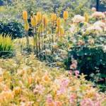 Plant Design Tips and Plant Choosing Tools