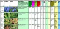 PLANTdatabase