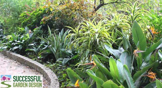 Evergreen planting