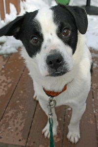 Linus came from a strained shelter that works with rescues to help save dogs.