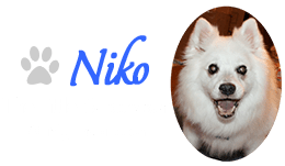 Niko The Little Supervisor & My Inspiration