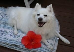 Niko with hibiscus