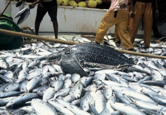 Fish Farmers In Nigeria