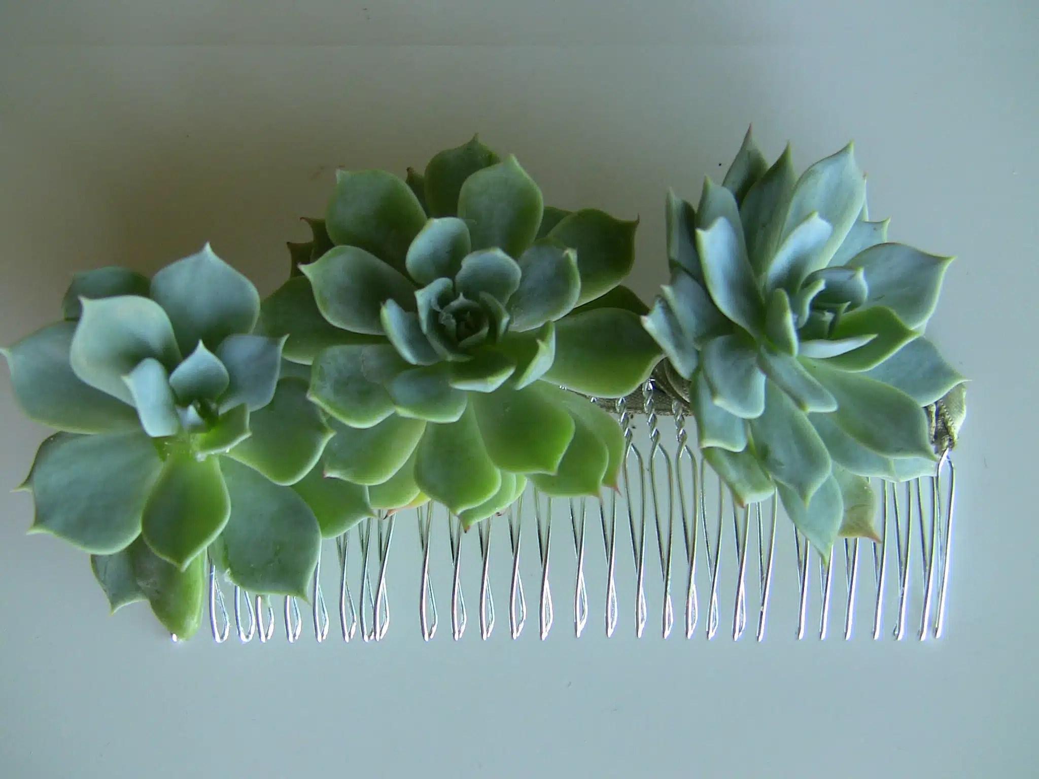 Succulent Trio Urban Succulents