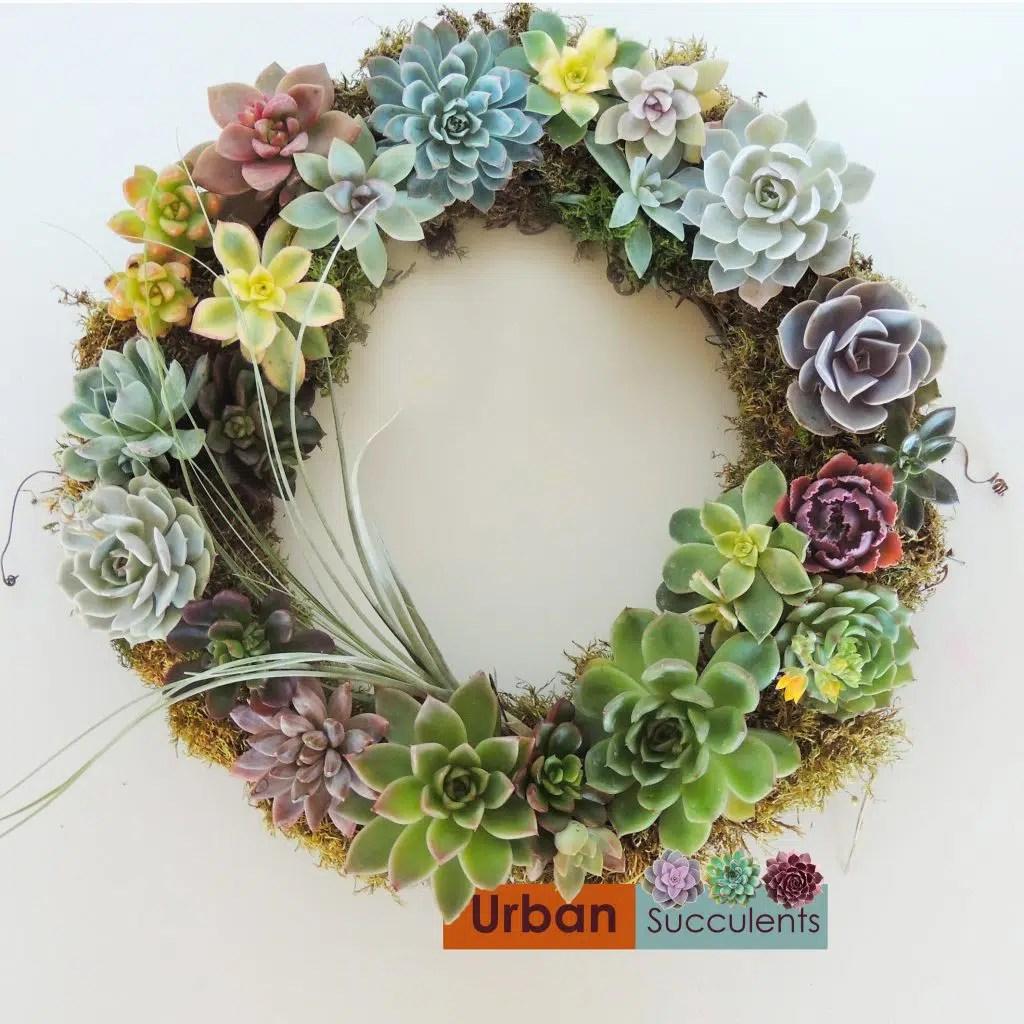 Succulent Wreath Urban Succulents