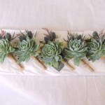 Succulent Boutonniere Wedding Prom Special Occasion Urban Succulents