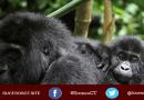 gorila de zoológico disfruta de los bebés