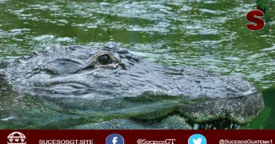 Aligátor atacando a una señora