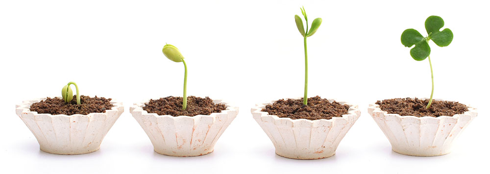 A New Website Will Help Your Business Grow