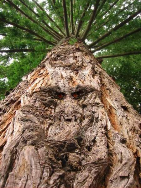 بالفيديو.. شجرة تنتقم من رجل قطع أحد فروعها