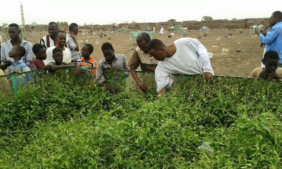 بالصورة : نباتات خضراء تنمو على مقبرة لعائلة راحت ضحية حادث سير دون غيرها من القبور !!