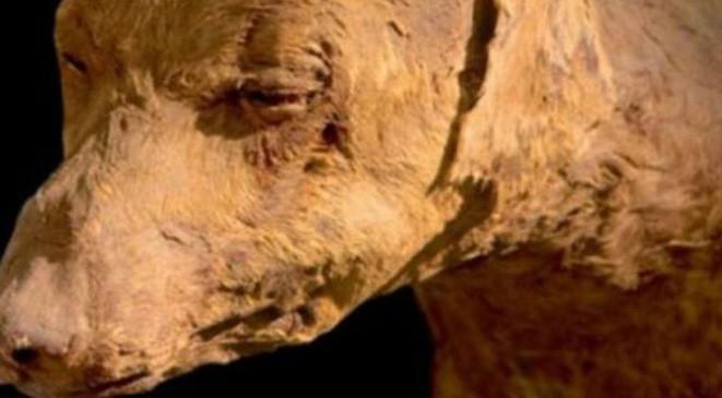 سر العثور على ملايين الكلاب المحنطة في مصر
