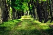 إرتفاع ايرادات الغابات إلى 99 مليون جنيه