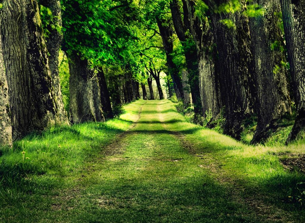 ارتفاع ايرادات الغابات إلى 99 مليون جنيه